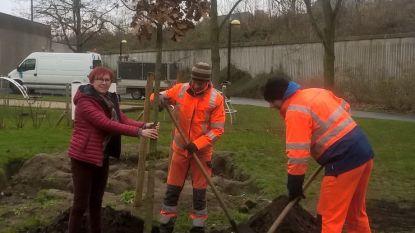 Stad Harelbeke plant een vredesboom