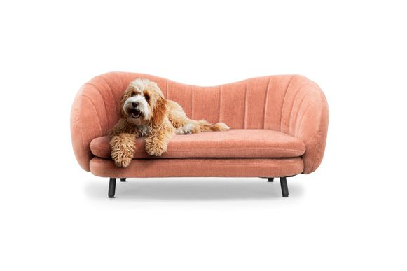 Flora Dog Edition