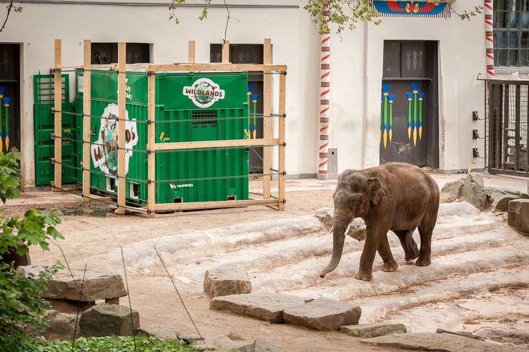 Kanvar voor zijn groene verhuiscontainer in de Zoo.