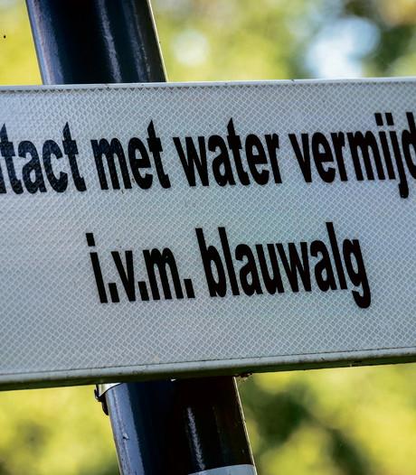 Blauwalg in Helmond en Beek en Donk