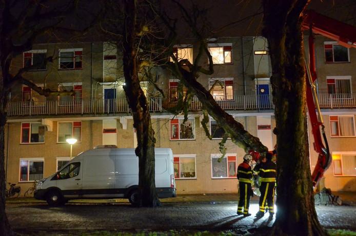 Boom tegen balkon op Rijtuigweg-Zuid in Bergen op Zoom.