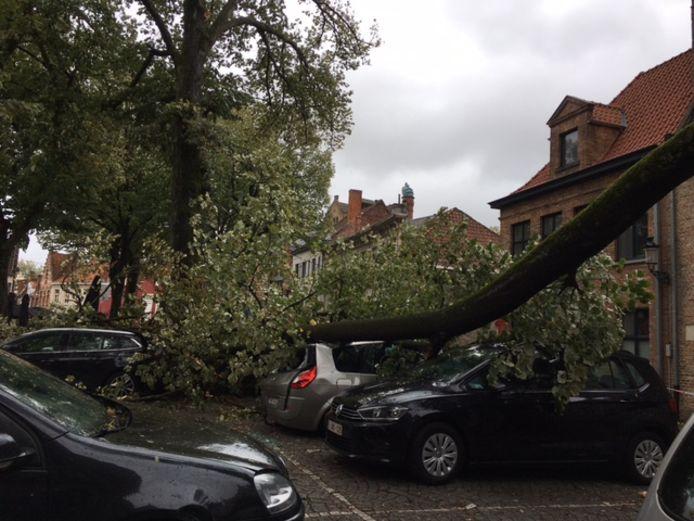 Op 't Walplein in Brugge raakten verschillende wagens beschadigd door een omgewaaide boom.