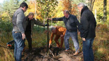 Nieuwe vredesboom aan inkom Mastenbos