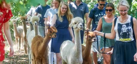 Alpacafarm Vorstenbosch opent zondag de deuren
