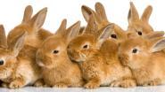 Meer dan duizend konijnen bezwijken door de hitte