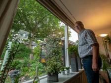 Platanen veroorzaken overlast rondom de Kattedoorn in Kampen