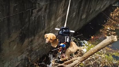 Indiër bouwt drone om gestrande puppy te redden