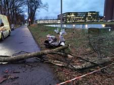Vallei maakt balans op na de storm: vooral omgevallen bomen en loshangende takken als schade
