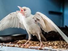 Vreemde vogel bij Dierenambulance Gouda