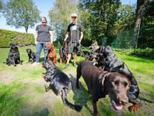 Jacco en Marloes uit Neede brengen probleemhonden weer in balans: 'Ongewenst gedrag negeren we'