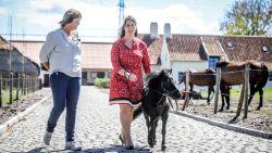Monique krijgt allereerste blindengeleidepaardje van Europa