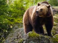 """Il se retrouve  confronté à une ourse lors d'une randonnée: """"Je pensais que c'était ma dernière heure"""""""