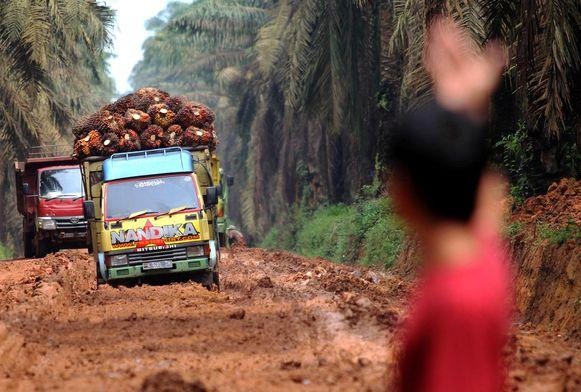 Vrachtwagens vervoeren palmolievruchten over een modderige weg in Sumatra.