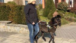 Dinky, het eerste blindengeleidepaardje