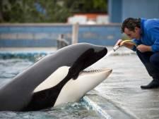 Orka Morgan op Tenerife bevallen van een gezond kalf