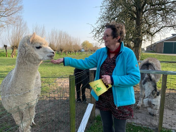 Mattie Verspuij van camping De Groene Waard in Noordeloos met haar alpaca.