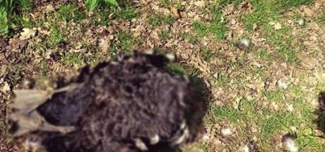 Politie zoekt dierenbeul die kop van zwaan afsnijdt in Culemborg