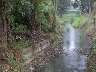 """Beverdam wordt afgebroken wegens wateroverlast, maar de dieren herstellen alles weer in één nacht tijd: """"Er moét iets gebeuren"""""""
