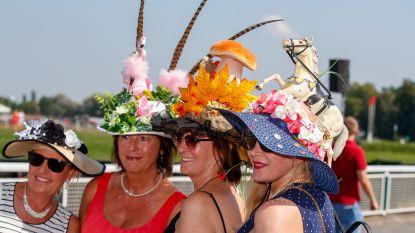 Van flamingo's tot pauwen: dit waren de mooiste en meest opvallende hoeden op Waregem Koerse