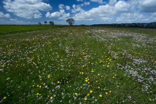 Als de plannen van Natuurmonumenten doorgaan, kunnen de grasvelden van Bloemkampen er in de toekomst zo uit zien.