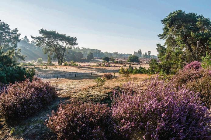 De geschiedenis van Den Treek is te boek gesteld. Het landgoed is ontsluierd.