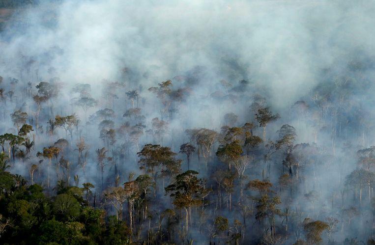 Duurzaamheidsdoelen halen in Nederland is ook van belang voor de regenwouden in Brazilië. Beeld REUTERS