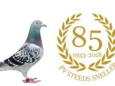 'Supersonische' duif bij Steeds Sneller