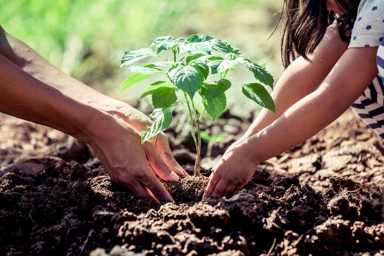 Iedereen is welkom om mee te planten.