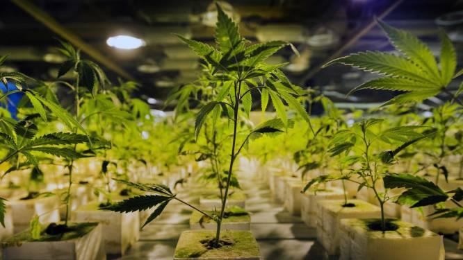 """Garagist riskeert als bendeleider vier jaar cel voor grote cannabisplantage in zijn woning: """"ik heb alles op internet opgezocht"""""""