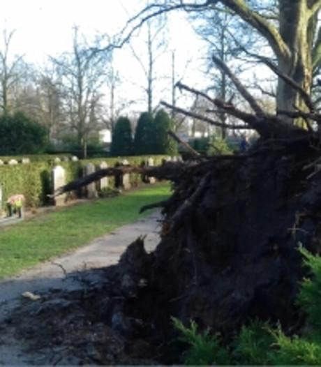 Twee bomen geveld op begraafplaats in Almelo, begrafenis later