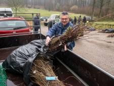 Bomen en struiken als schaduw voor vee in Rozendaal