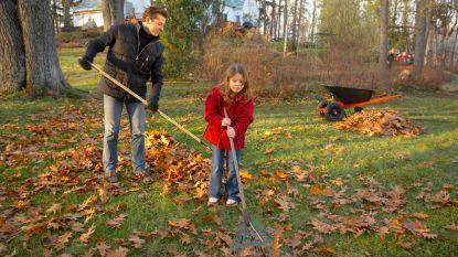 Daar is de herfst, daar zijn de bladkorven: op deze 33 plaatsen plaatst de stad inzamelpunten voor bladeren