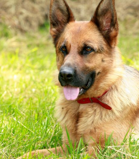 Meerdere honden ziek geworden na wandeling in bos bij Nunspeet