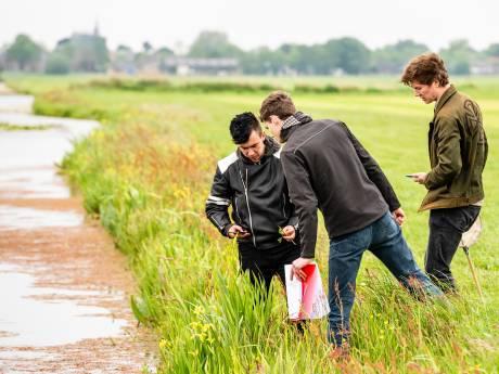 'Slimmer maaien zorgt voor meer insecten en meer weidevogels'