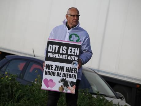 Dierenactivisten bij slachterij De Hoef: 'kijk in de ogen van slachtoffers'