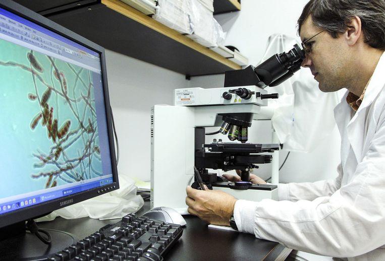 Een laborant onderzoekt onder een microscoop de bacterie die meningitis veroorzaakt. (foto ter illustratie) Beeld ap