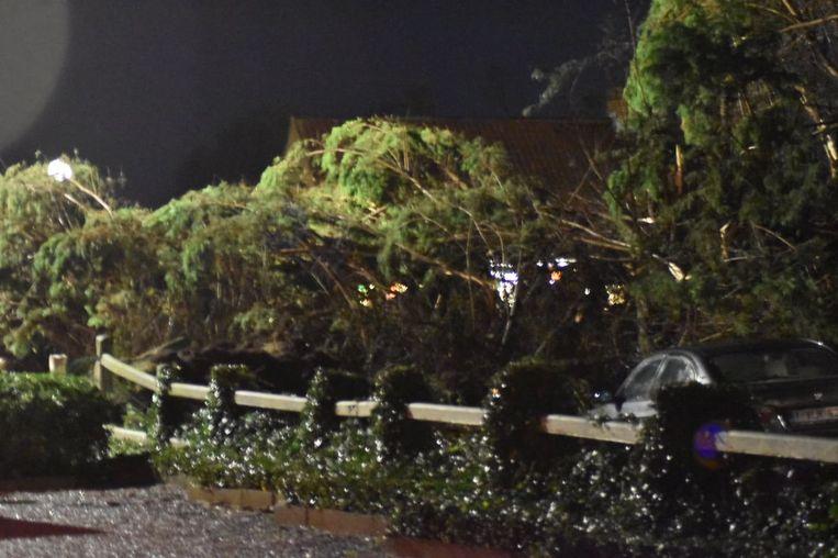In de Pylyserlaan in Koksijde waaide een boom om op straat. De weg is volledig geblokkeerd. Een voertuig deelde net niet in de klappen.