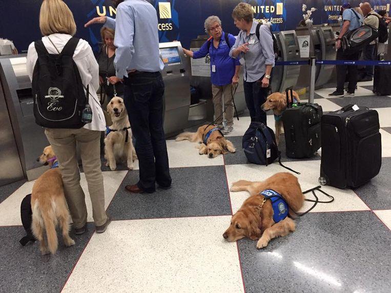 Enkel honden in de luchthaven. Sommige dieren kwamen vanuit Nebraska en Illinois naar Las Vegas.