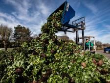 Westland zoekt naar nieuw leven voor tuinbouwproducten