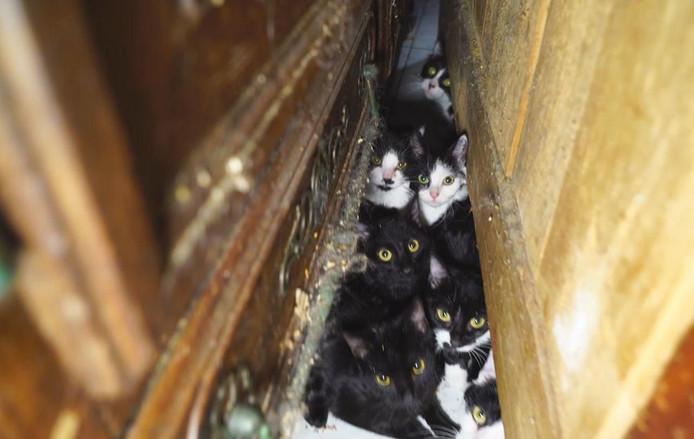 130 katten werden gehouden in een Parijs appartement van 25m2.