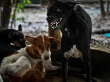 Steeds meer meldingen van Nederlanders getroffen door hondsdolheid