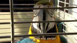 Seizoen 10 van De Buurtpolitie is afgelopen en deze gevogelde vriend is zeer tevreden