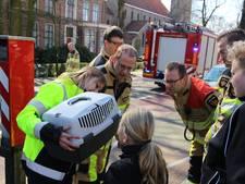Brandweer haalt kat na 24 uur uit boom in IJsselmuiden
