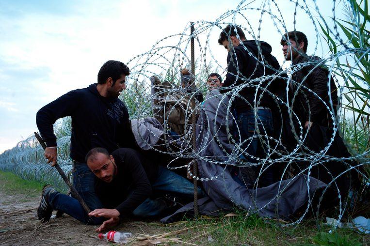 Syrische vluchtelingen kruipen onder prikkeldraad op de Servisch-Hongaarse grens in de buurt van Roszke