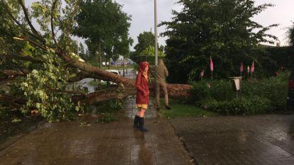 Onweer raast over Melle: boom omgevallen
