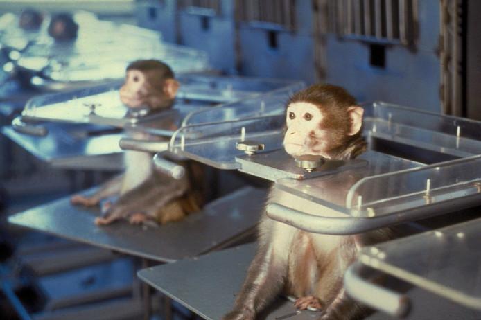 Archiefbeeld van apenproeven voor het uitvoeren van een satellietvlucht