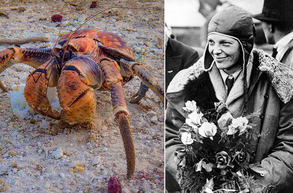 Het team, dat gefinancierd wordt door National Geographic, gelooft dat de kokoskrabben de botten van Earhart verstopten in hun holen.