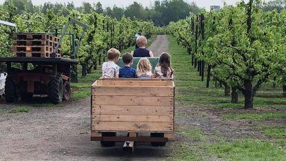 Fruitbedrijven openen de deuren voor Bloesembeleefbal, maar wel amper nog bloesems