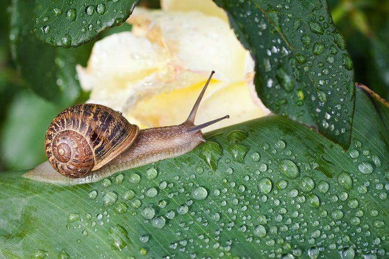 Er bestaan veel tuinmythes, maar als het over slakken gaat, tarten sommige echt wel de verbeelding. Tal van zogenaamde wondermiddeltjes zijn namelijk puur op toeval gebaseerd. Welke dingen helpen wel écht tegen slakkenvraat?