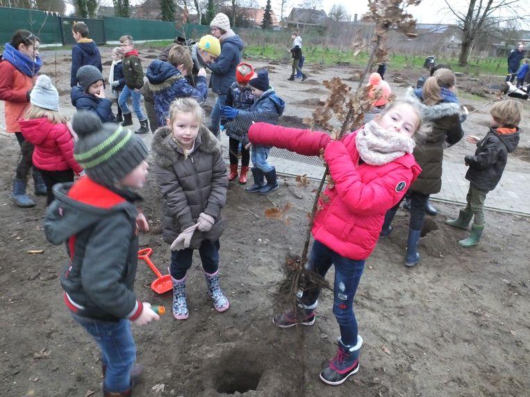 De leerlingen van basisschool Sint-Hendrik planten enkele bomen achter het schoolgebouw.